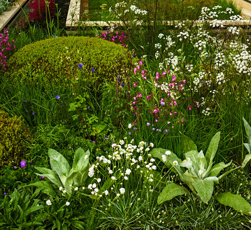 Planting in our Chelsea show garden 2013