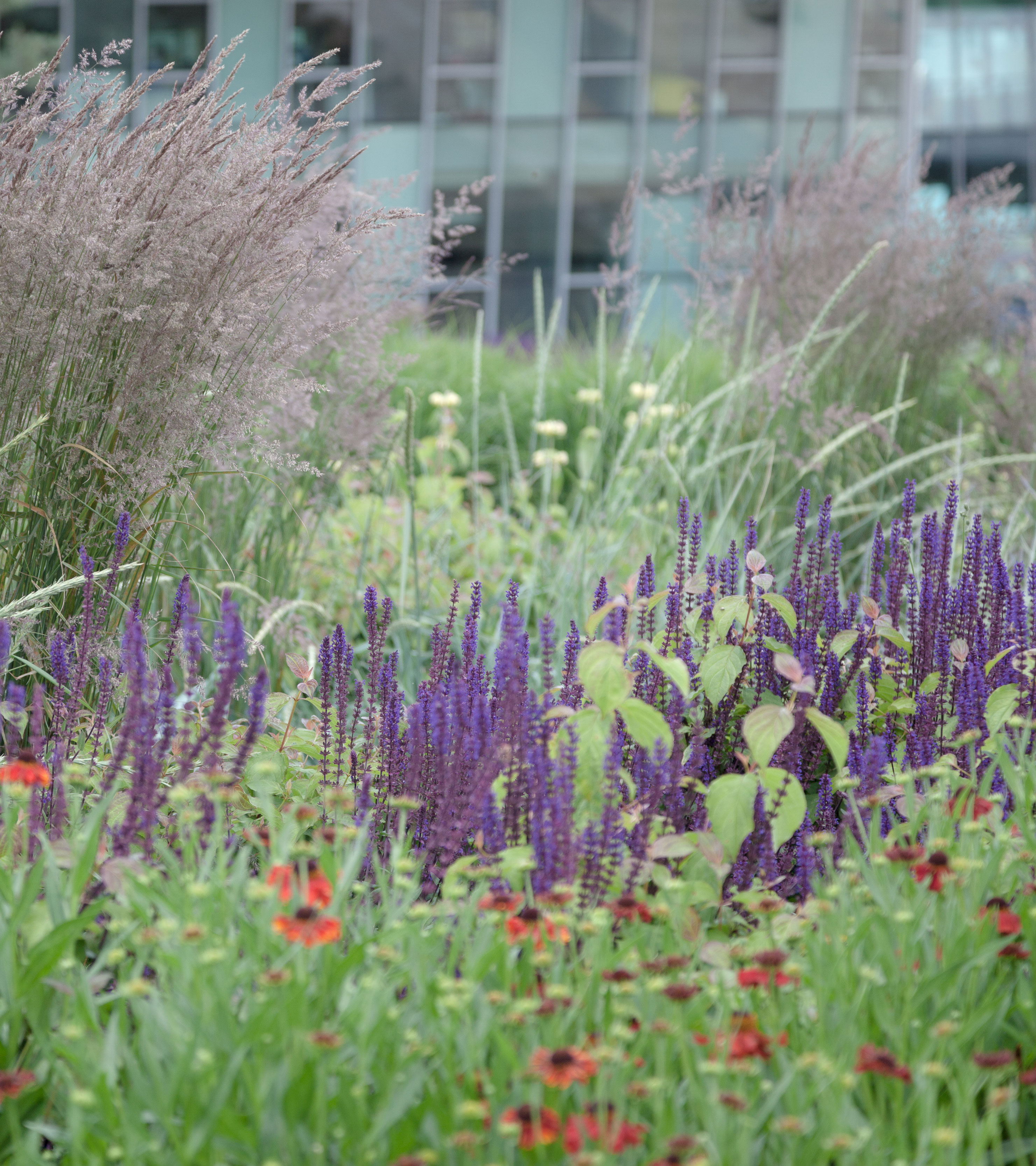 Planting outside the EBi building